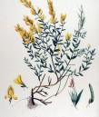 Цветило