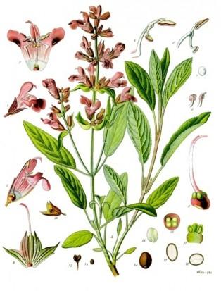 Градински чай