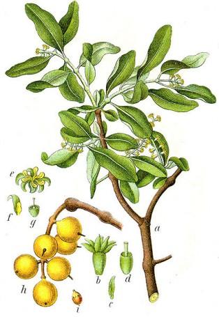 Жълта лепка