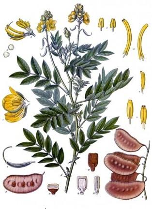Майчин лист