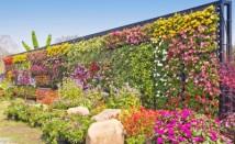 Цветя, които пречистват въздуха у дома