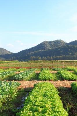 Вредата от пестицидите се предава няколко поколения