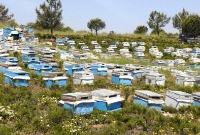 Медът ни пълен с ГМО и антибиотици