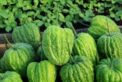 Горчив пъпеш – природата срещу диабета