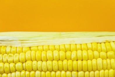 ГМО царевицата вече не е устойчивa на вредители