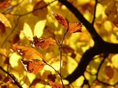 10 суперхрани, които трябва да включите в есенната си диета – част 1