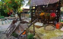 4 зеленчука, които можем да засеем сега и да наберем през късна есен – част 1