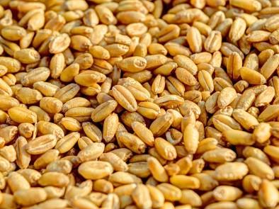3 признака, че не консумираме достатъчно растителни фибри (влакнини)