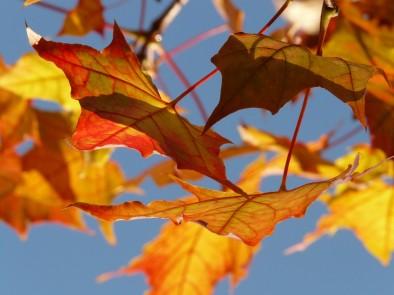 Подгответе организма за настъпващата есен