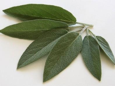 Градински чай – билката чудо