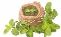 Листа от мента – ползи за здравето и лечебни свойства