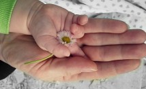 Безплатни консултации за двойки с репродуктивни проблеми