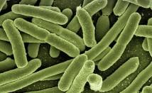 Домашни лекове при инфекция на бъбреците