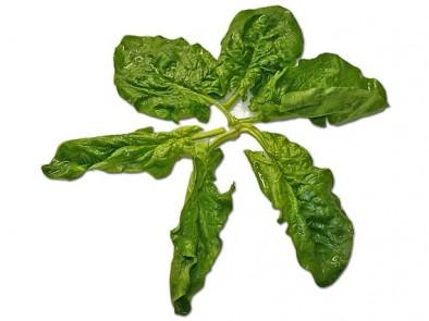 Здравословни ползи на спанака