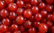 С какво червеният касис е полезен за здравето ни