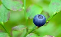 Кое растение замества аспирина, като повлиява болката и възпалението