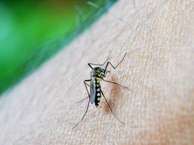 Как да си направим био репелент против комари в домашни условия