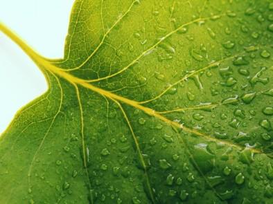 4 храни, които ще хидратират организма ви по-добре от чаша вода