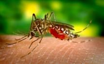 Свещ с лимонова трева и пчелен восък – отличен начин за справяне с досадните комари
