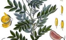Чай от сена за сваляне на теглото