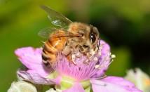 Английска сол – чудесен домашен лек против ужилване от пчели