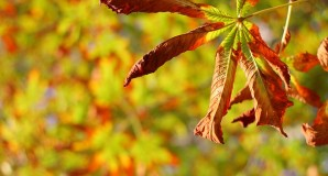 Several tips how to stay healthy in autumn