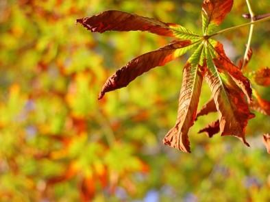 Няколко съвета как да бъдем здрави през есента