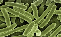How to cure Escherichia coli?
