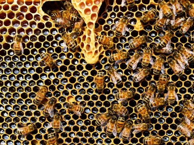 5 uses of beeswax
