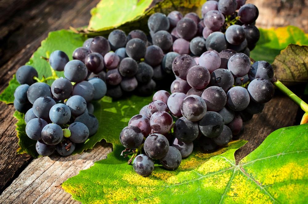 Виното - източник на витамини и минерали - част 2