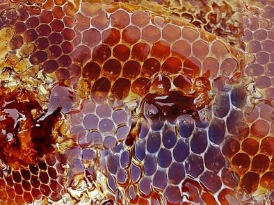 Мед от кестени – лечебни свойства и здравословни ползи