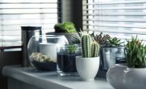 Как да пречистим въздуха у дома с натурални средства