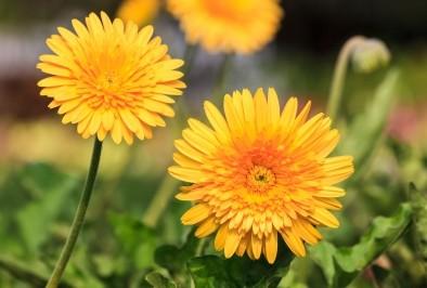 Домашен билков сироп богат на желязо при анемия и пролетна умора