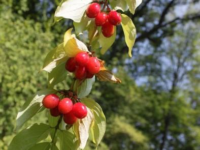 Дренки – да бъдем здрави през есента